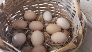 Yumurtaların saman içerisinde saklanması bozulmalarını önler.