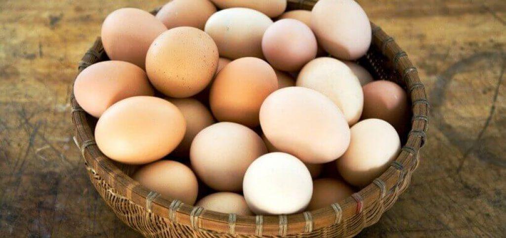 Tavuklarda yumurta verimi ile ilgili merak edilen her şey.