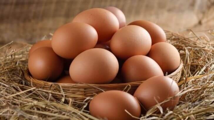 Tavuklarda yumurta verimi arttırma kapsamında tüm detaylar Süslü Kanat'da !